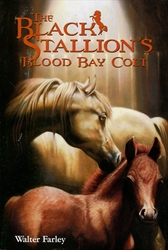 Black Stallion's Blood Bay Colt