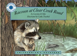 Raccoon at Clear Creek Road