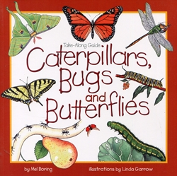 Caterpillars, Bugs and Butterflies